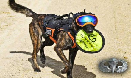 Airborne Dog : Dutch shepherd Jumps From an Airplane